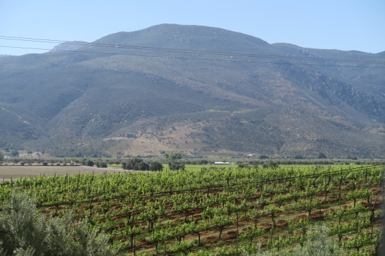 Valle de Guadalupe wine growing area